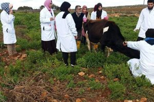 رحلة علمية لكلية الطب البيطري بجامعة عمر المختار.