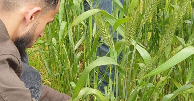 مشاريع التخرج لطلبة قسم المحاصيل بكلية الزراعة